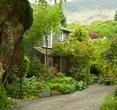 pic of english cottage garden  - garden at the front of old house - JPG