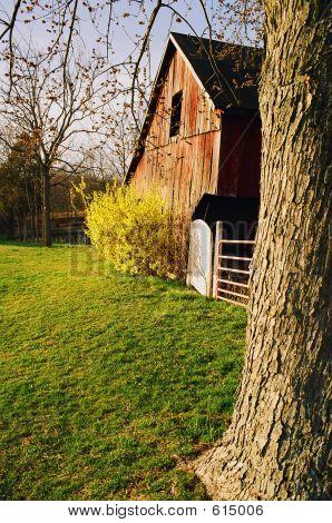 Barn At Farm