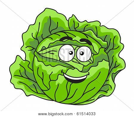 Fresh green leafy cabbage vegetable