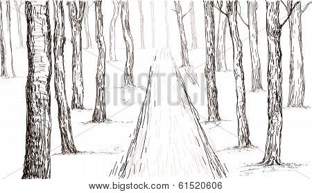 Forest Hand Drawing