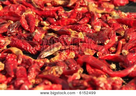 Dried Red Chili Pepper