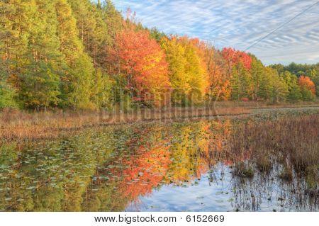 Autumn Shoreline