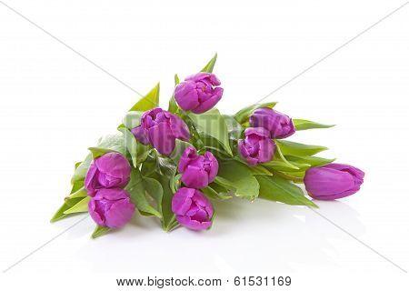 Bouquet Of Pink Dutch Tulips
