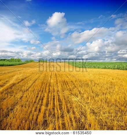 field after harvest