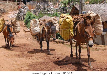Pack Ponies