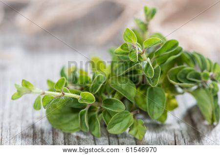 Oregano Plant On Wood
