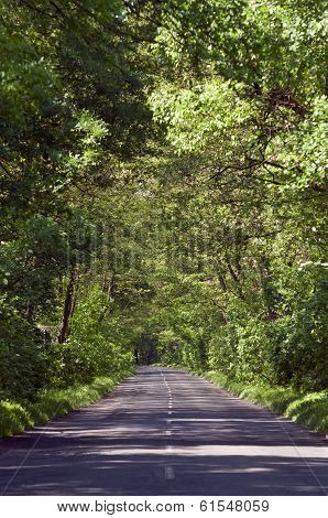Empty Country Road In Tree Tunel Vertical