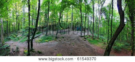 Oil Painting Stylized Photo Of Forest Panorama With Loosely Growing Trees And A Clearing