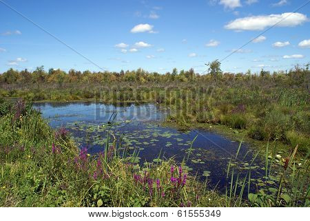 Swampland Lilies