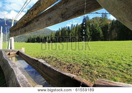 Wooden trough filled with water for cows to drink
