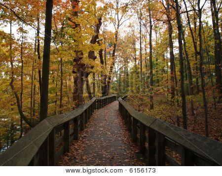 Forest Boardwalk at Brandywine Falls in Ohio.