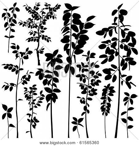 Set of illustrated silhouettes of generic tree saplings