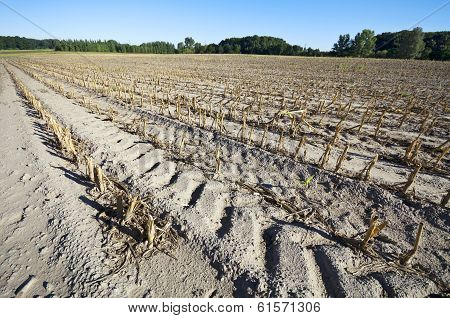 Cornfield After Harvest Wide