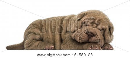 Side view of a Shar Pei puppy lying down, sleeping, isolated on white