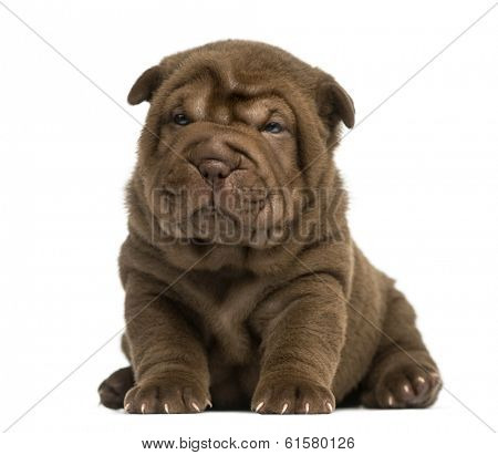 Shar Pei puppy sitting, isolated on white