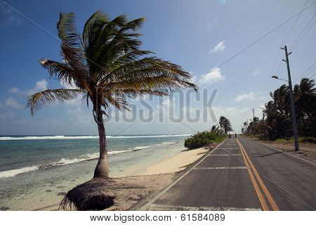 Palm Trees and Road in San Andres