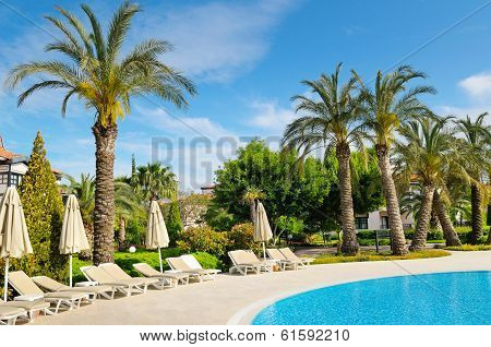 Outdoor Swimming Pool And Beautiful Palm Trees