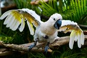 stock photo of angry bird  - Angry parrot  - JPG