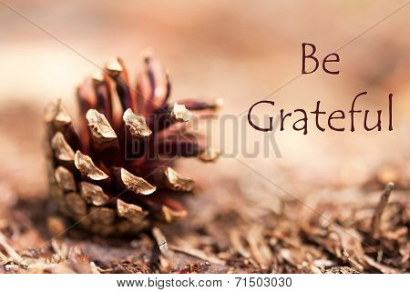 Fir Cone With Be Grateful