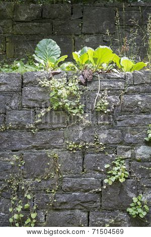 Vegetated Natural Stone Wall