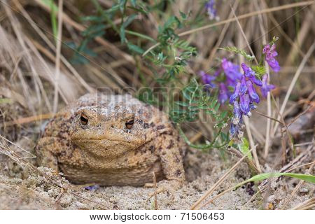 Toad On The Beach