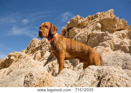 Golden Dog With Cliff In Background