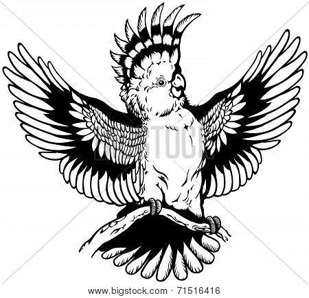 cockatoo black white