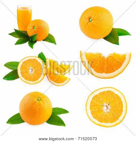 Oranges fruits collection