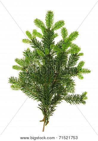 Branch Of Christmas Tree Isolated On White
