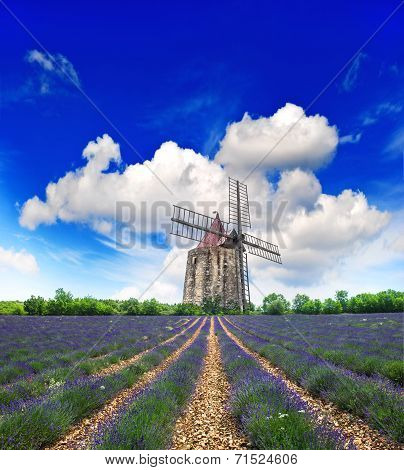 Lavender Field With Windmill In Provence