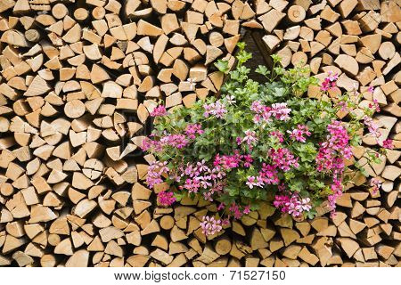 Flowers in the woodshed