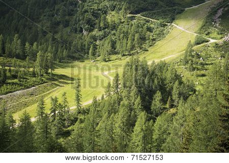 Mountain Path In The Forest, Dolomites