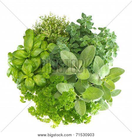 Closeup Of Variety Fresh Mediterranean Herbs