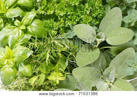 Variation Of Fresh Mediterranean Herbs