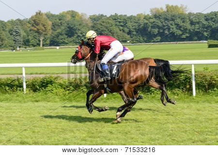 WROCLAW, POLAND - SEPTEMBER 6: Race for 3-year-old Arabian horse group II on 6 September 2014 in Wroclaw, Poland. In the photograph can be seen horses Warang no. 4. Race wins horse Elaria no. 9.