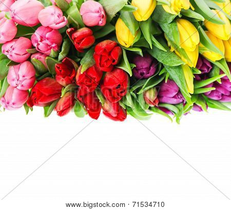 Bouquet Of Multicolor Tulips Over White