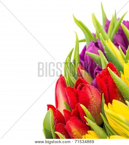 Closeup Of Fresh Spring Flowers With Water Drops