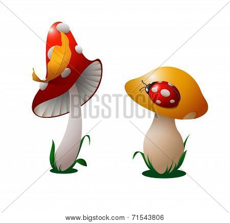 Two Mushrooms.