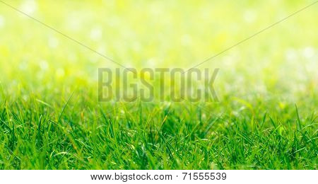 Green Grass Border With Defocused Natural Background