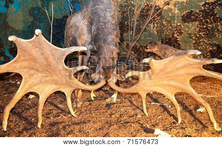 Realistic Model Of Prehistoric Animal