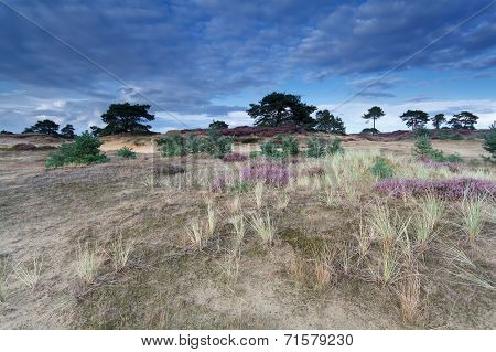 Blue Sky Over Sand Dunes With Flowers