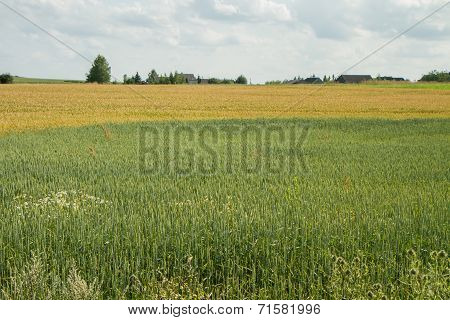 Fertile Fields