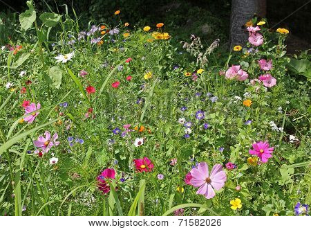 Mixed Colorful Wildflowers