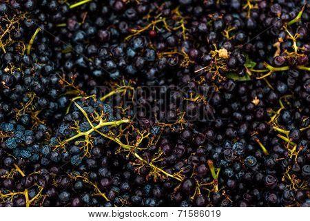 Grape Smashing