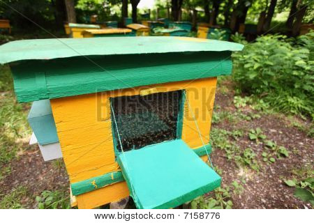 beegarden. a one old beehive in focus.