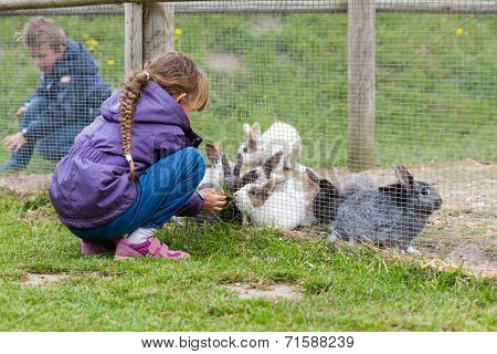 Kids Feeding Rabbits