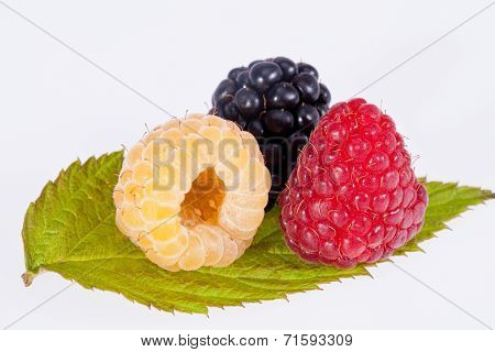 colorful rasberries on green leaf on white background close up