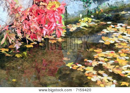 Small Pond In Autumn City Park