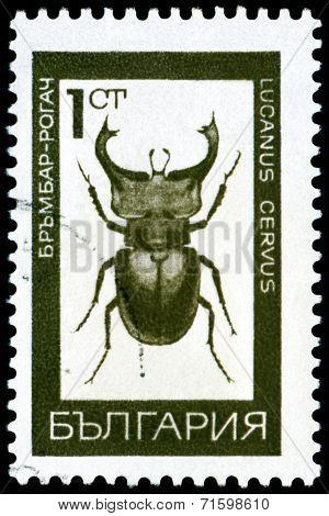 Vintage  Postage Stamp.  Bug - A Stag Beetle.
