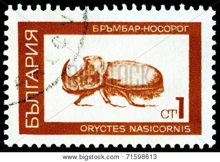 Vintage  Postage Stamp.  Rhinoceros  Beetle.